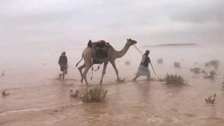沙漠,骆驼和水