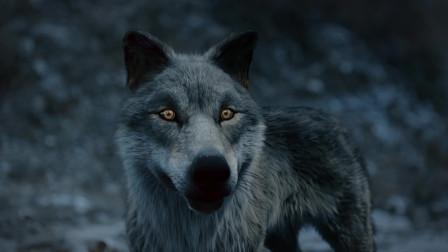 塞上风云记 俊杰大战群狼,布鲁德前来相救,涅槃竟然是狼王