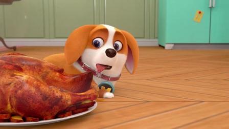 短腿小柯基:我给了主人一次舔狗的机会