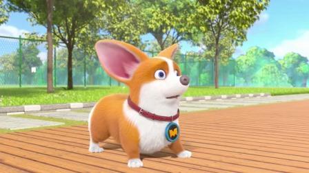 短腿小柯基:我就剩下主人这只单身狗作伴了
