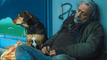 狗狗为了找到主人,历经两年半找到回家路