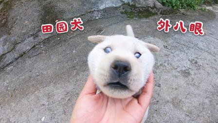 小奶狗第一次出户外玩耍,被阿爆一路追着咬,它不慌不忙淡定应付