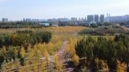 第一时间 辽宁卫视 2020 今年沈阳市已完成增绿8.21平方公里