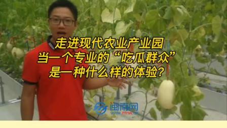 中国城市新闻网媒联盟打卡地——佛山市三水区白坭镇康喜来疏菜基地