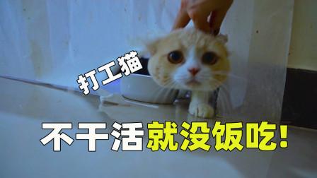 用纸挡住猫吃饭,猫:打工猫太难了!吃饭都这么费劲!