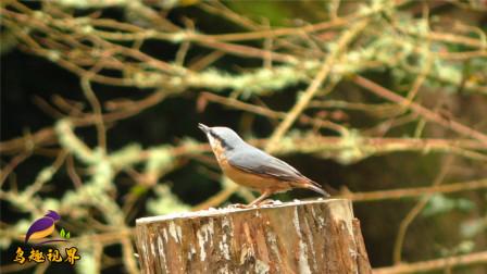 各种美丽野鸟合集,看看你能认识几种?