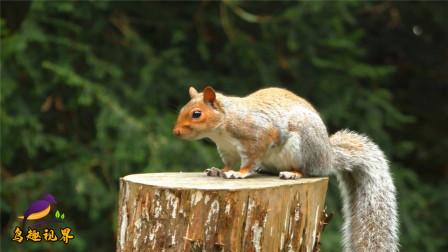 松鼠与小鸟抢食物,场面太逗趣了