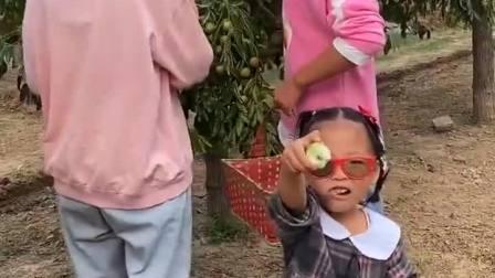 有趣童年:好多枣子,真好吃,萌娃笑哈哈