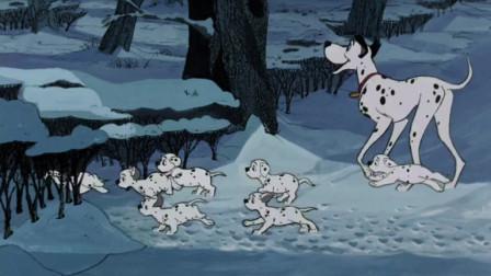 101忠狗:庞戈它们的行踪被克鲁拉发现,庞戈它们的处境更加凶险