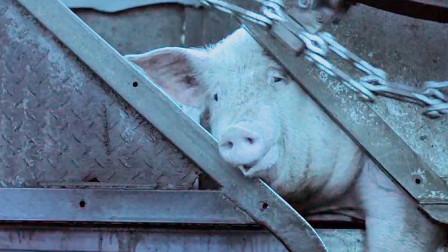 亲妈浑身一股猪肉味,儿媳嫌弃的捂鼻子,儿子的反应却更叫人寒心