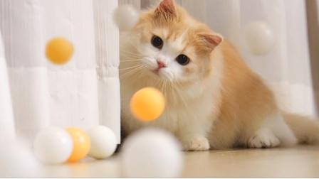 猫咪打乒乓球,一次发一球不过瘾,主人连发几百次!
