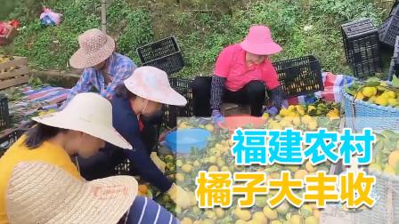 自驾福建南平,路遇农村橘子大丰收,超市3块果民卖几毛一斤!