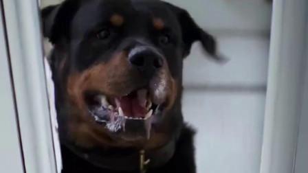 美女回家发觉狗不对劲,立马躲进冰箱,勉强逃过一劫!