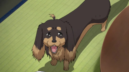 狗与剪刀的正确用法:男主转身为狗,跟着S女来到自己的公寓,要做了断