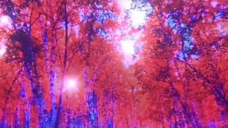 一不小心误入了仙境,养了眼,醉了心,大兴安岭的秋天