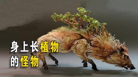 """世界上唯一身上长出植物的动物,""""懒""""才是最强的生存之道!"""