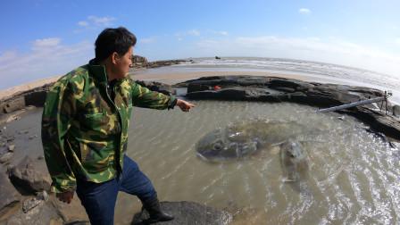 """退潮后""""龙尾""""出海隐藏浑坑,抽干后一眼望去全都是,渔民都惊了"""