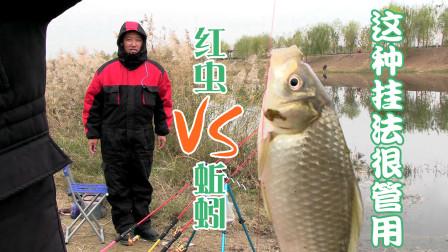 冬钓万能饵红虫蚯蚓,用这种方法挂钩,1米8鱼竿小夫妻忙不停