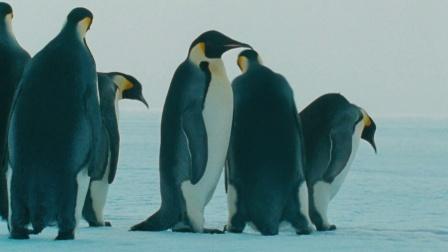 《帝企鹅日记》看完这段你就懂了,催泪来袭(9)