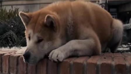 忠犬八公催泪片段,看一次哭一次