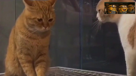 橘猫:我错了,橘白:滚啊