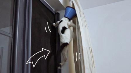 贪吃流浪猫被怪阿姨骗去绝育,识破真相后连夜撬窗企图逃跑