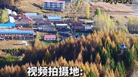 "BBC:中国植树造林的作用""被低估了"""