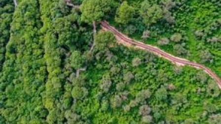 """BBC:中国植树造林的作用""""被低估了""""!美宇航局:中国是主导全球变绿的重要力量 #中国"""