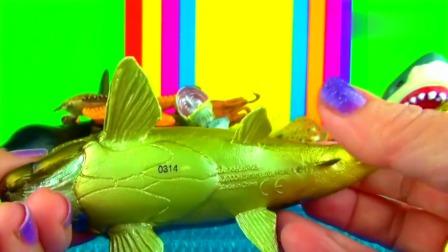 认识海底世界的海洋小动物们