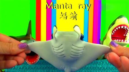 认识大白鲨寄居蟹生活在水里的小动物