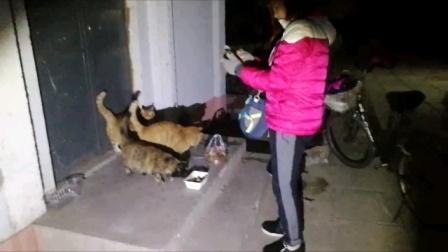 小区流浪猫