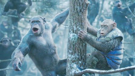一场雪崩灾难,消灭地球上所有人类,猩猩却靠爬树躲过一劫