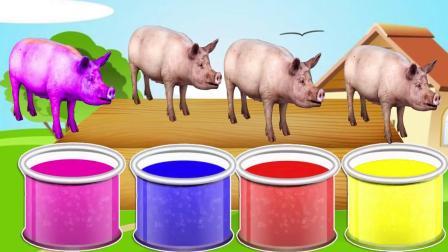 育儿英语颜色认知,猪在油漆里变成各种颜色,丰富宝宝想象力