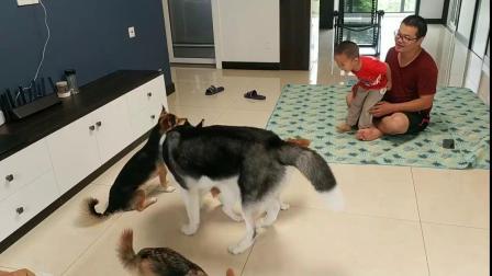 收养的流浪狗天生胆小,看到陌生人狗的反应看得人心疼