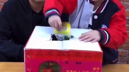 淘气的童年:箱子里面到底有什么呢