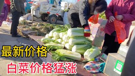 河北农村白菜价格猛涨,一天一个价,看今天最新价格多少钱一斤?
