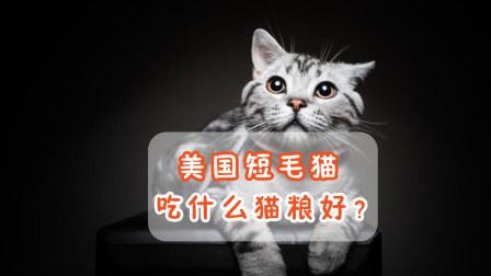 美国短毛猫吃什么猫粮好?