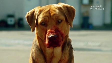 顺狗子被遗弃路边,归来时已是狗王,带领狗群对人类以牙还牙