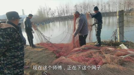 农村百年鱼塘捕捞现场,使用这种大型拉网,能把鱼塘一网清塘