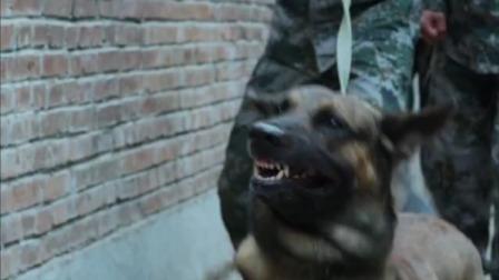 神犬奇兵:郭有栋带步枪去训练,没成想和军犬沧海较上劲