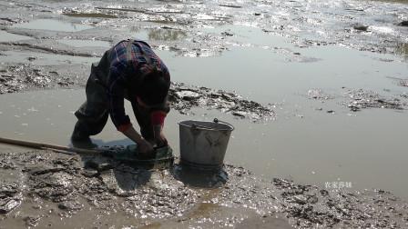 农村鱼塘过年清塘,莎妹跑去捡漏上集,第一网捞下去开门红了