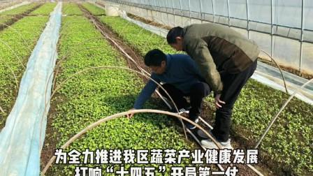 """春耕正当时!临安区蔬菜技术团队服务菜农,保障临安""""菜篮子""""!"""