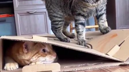 小橘猫好险,侥幸逃脱!