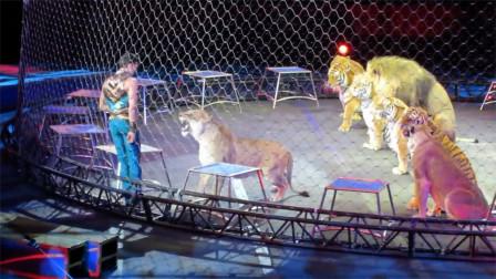 马戏团表演险出意外!狮子攻击驯兽师,气氛近乎凝固