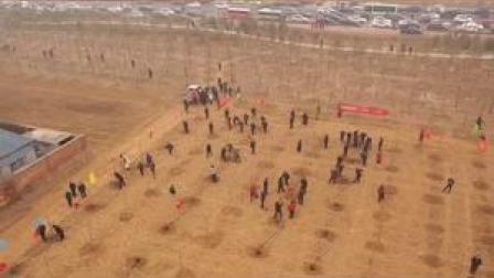 辛集市开展春季义务植树活动,创建森林城市人人参与,人人受益。