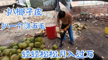 海南文昌东郊椰林!这样扒椰子皮一个赚五毛钱,轻轻松松月入过万