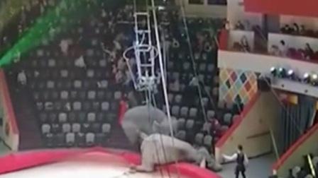 共度晨光 2021 俄罗斯:场面 马戏团大象踩踏观众席