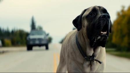 一条狗的使命2:扎心了乔