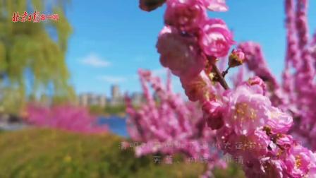 春色满园关不住的大运河,天蓝、树绿、水清、花红……