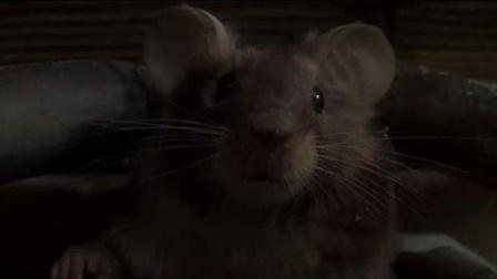高智商老鼠智斗沙雕兄弟《捕鼠记》